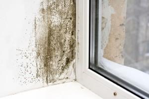 Aria malsana in casa? Colpa delle muffe