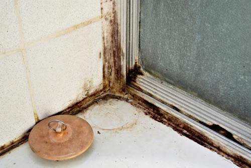 Una casa su tre soffre di muffe, allarme asma e allergie
