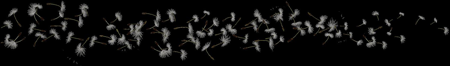 pollen pistils